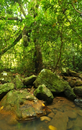 Tropical Rainforest Landscape, Thailand photo