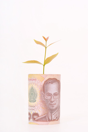 Tree shoot growing from Thai baht  photo
