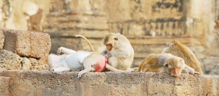 Monkeys in Lopburi, Thailand photo