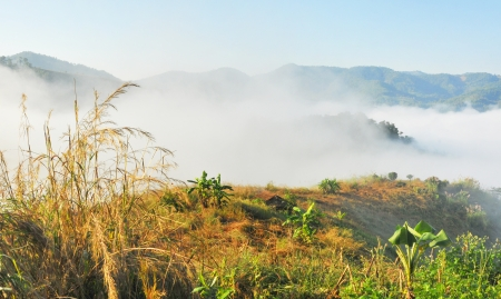 Mountain and mist in morning at Chiangrai,Thailand   photo