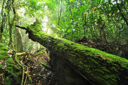 Tropical Rainforest Landscape, Thailand photo