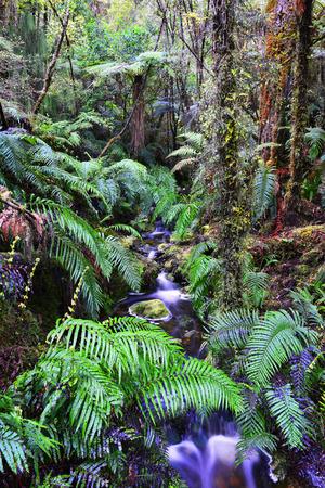 fern  large fern: fern on the background of the creek