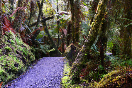 temperate: Temperate rainforest, South Island, New Zealand.