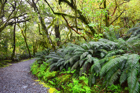 aspiring: Mount Aspiring National Park