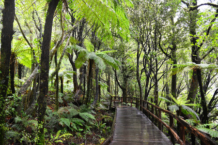 fiordland: Temperate rain forest, Fiordland National Park, South Island, New Zealand.