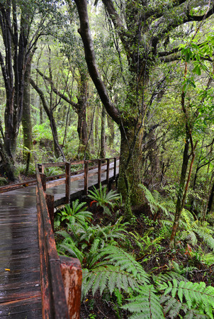 temperate: Temperate rain forest, Fiordland National Park, South Island, New Zealand.