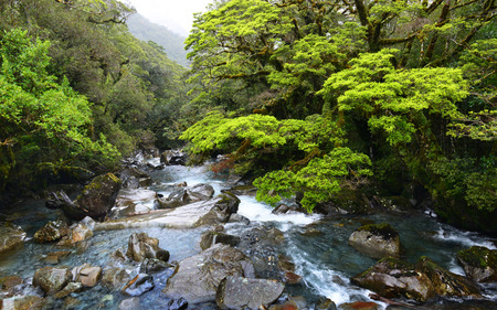 Forest River and Mountains, New Zealand