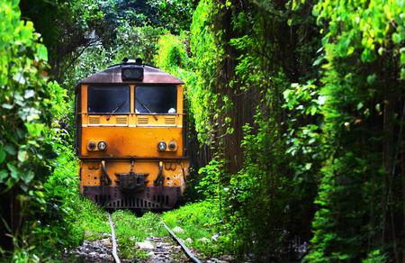 tiefe: Zug auf Natur Zug Baum-Tunnel läuft in Thailand Bangkok