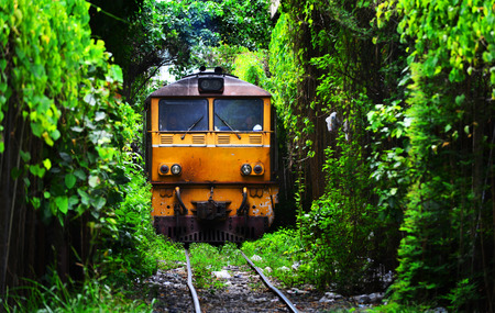 endlessness: Train running on Natural Train tree tunnel in Thailand Bangkok