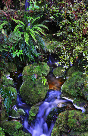 aspiring: Temperate rain forest, South Island, New Zealand.Track - Mount Aspiring National Park Stock Photo