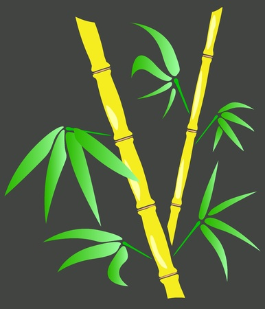 lucky bamboo: branches and leaves of bamboo Illustration