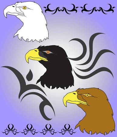 head protection: eagle s head and patterns  Illustration
