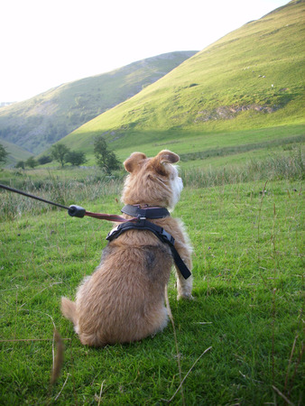 go for: Cute dog sitting and waiting to go for a hill walk