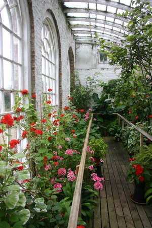 conservatory: Old conservatory with plants