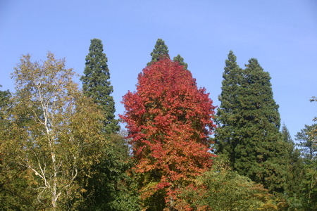 autumn colour: Autumn colour of trees