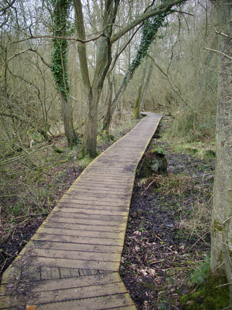 disappears: Wooden boardwalk in woodland