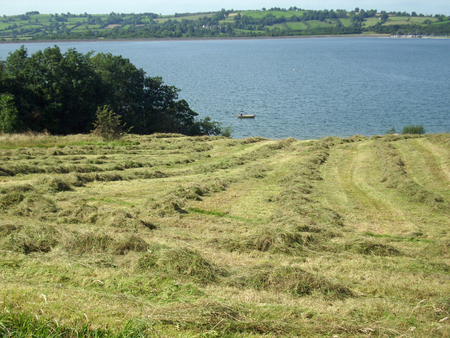 recently: Recently cut hay meadow