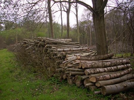 forest management: Firewood log stack