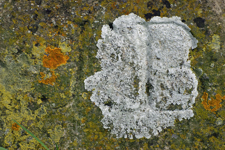 inscribed: Algae and lichens on stone