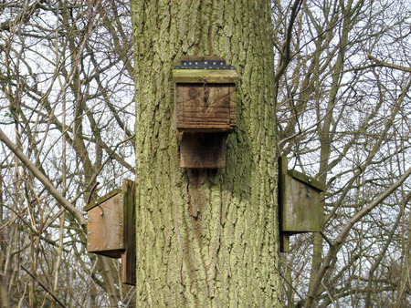 bat animal: Bat boxes on tree Stock Photo