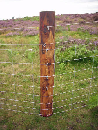 wire fence: Wire netting fence