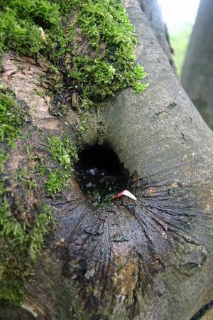 rot: Tree rot hole Stock Photo