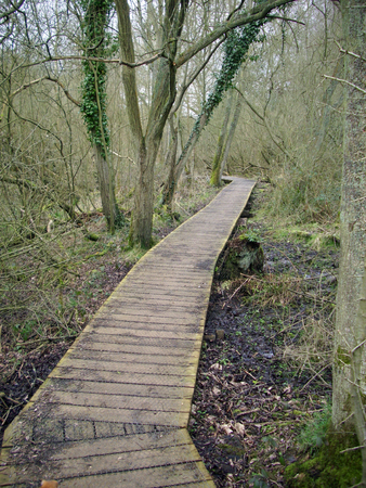 disappears: Raised wooden boardwalk running through woodland with trees and leaf litter. Disappears into the distance between trees and turns. Background of woodland trees. Stock Photo