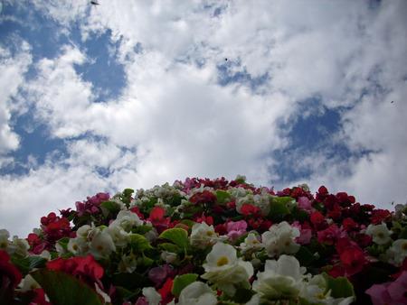 주로 흰색, 분홍색 및 빨간색 베고니아 꽃의 타워의 얼굴을 찾고 배경으로 흰 구름과 푸른 하늘이. 스톡 콘텐츠