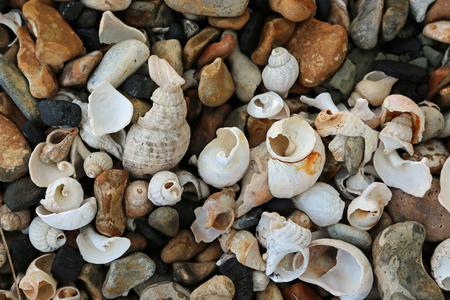 부서 지거나 침식 된 조개, 주로 whelks (Buccinum undatum) 및 슬리퍼 limpets (Crepidula fornicata)는 멋진 콜라주 효과를 형성하는 멀티 컬러 자갈이있는 돌 해변에