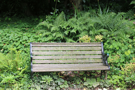 Traditional wooden park seat on a metal frame in a shady corner surrounded by plants.