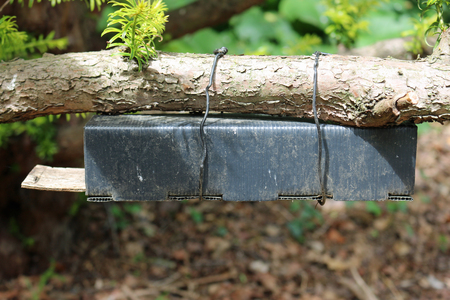 Black plastic and wood dormouse (Muscardinus avellanarius) nest tube survey box attached underneath a tree branch with wire. Stock Photo
