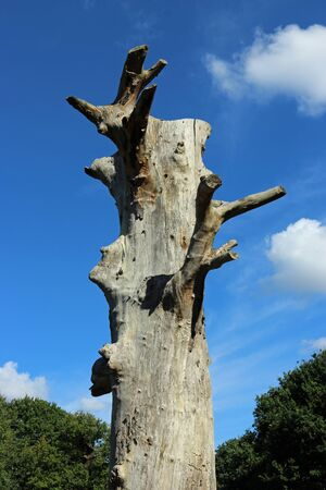 Old standing dead tree with no crown, branches or bark and a background of trees, blue sky with white clouds.