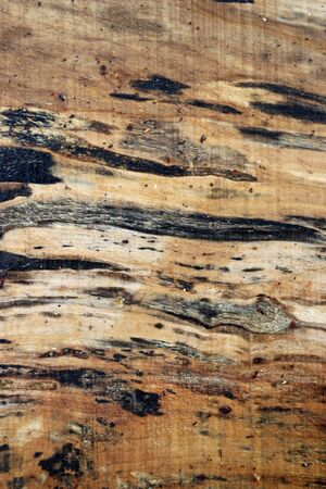 Spalted maple, Acer species,tree sawn timber plank with knots, grain, fungal spalting marks and rain water and could be used as a background.