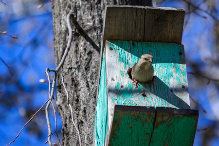 basking: little bird sat on the feeder basking in the sun