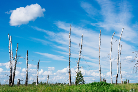 Landscape in russia which depicts broken trees as a result of a great hurricane Stock Photo