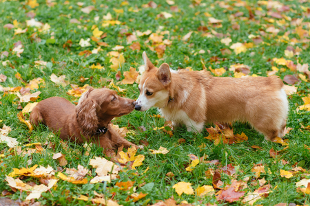 two dogs frolic outdoors in the fall