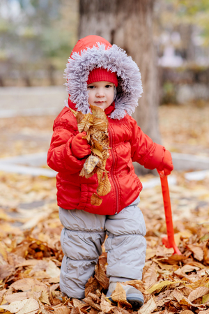 small child collects fallen leaves in the park