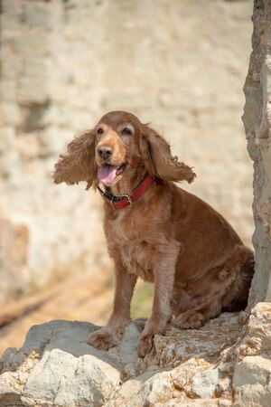 The dog sits on a rock and stones with his tongue out.
