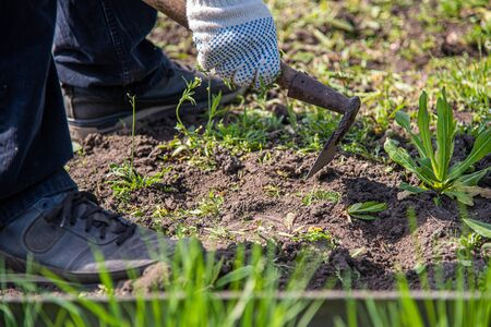 an old man works on the ground and removes a weed from his garden Archivio Fotografico