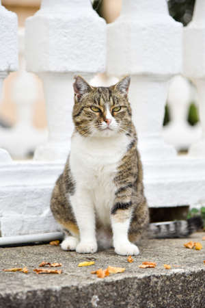 Hungry homeless cat asks for food from passers-by