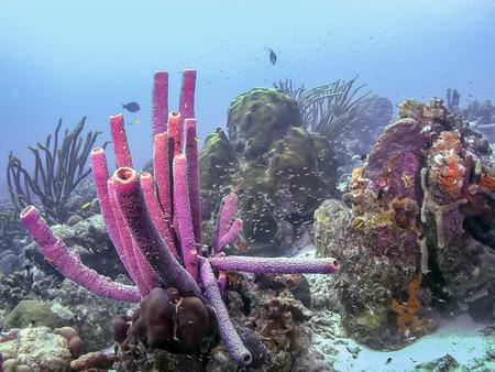 Arrecife de coral en el mar de Carbiiean