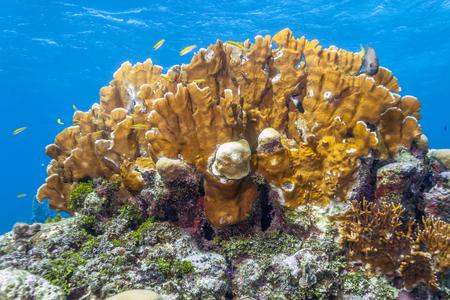 Coral reefoff the coast of the island of Roatan Honduras Stock Photo