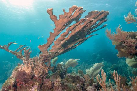 Coral garden in Caribbean