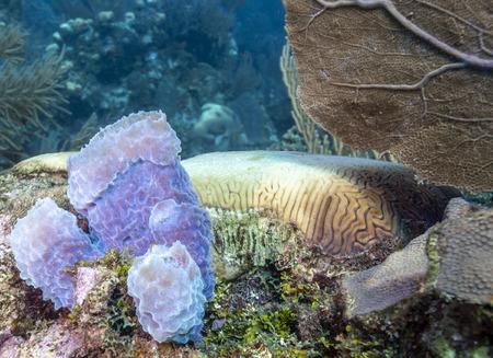 Jardín de coral en el Caribe frente a la costa de la isla de Raotan Foto de archivo