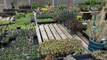 Plants In Gardening Center 003 Reklamní fotografie