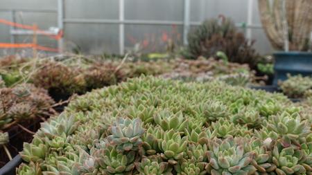 Plants In Gardening Center 002