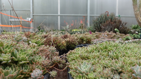 Plants In Gardening Center Reklamní fotografie