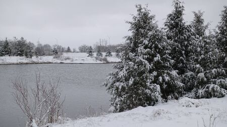 Closeup Of Pine Trees Near Lake And Water In Winter Standard-Bild