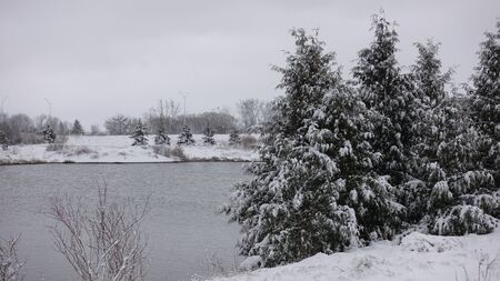 Pine Trees By Lake In Winter With Snow