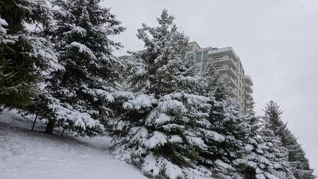 Pine Trees In Front Of Apartment Building In Winter